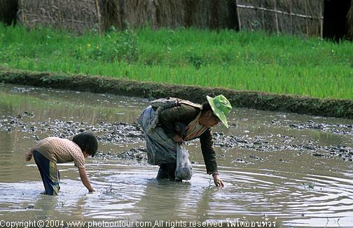 หอยขมน่าจะเป็นอาหารเมนูใหม่สำหรับชาวม้งที่อยู่บนดอย เมื่อมาหากินบนพื้นราบจึงต้องปรับตัว