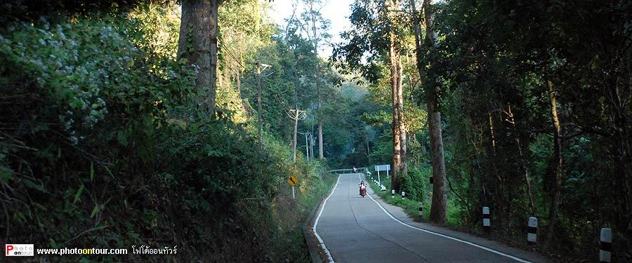 ทางออกหมู่บ้าน มีต้นไม้ใหญ่ที่หายากหลายชนิด เช่นไม้แดง (ไม้เนื้อแข็ง)