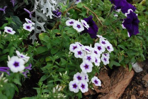 ดอกไม้ในนิทรรศการพระเมรุฯ