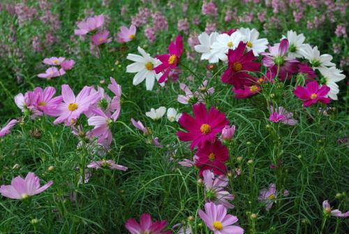 ดอกไม้ในนิทรรศการ (คลิกที่ภาพจะได้ภาพขนาดใหญ่ขึ้น)